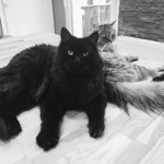 Merci Sandra pour la photo de Marushka et Morpheus