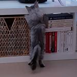 Oliver explore la maison chez Laurence