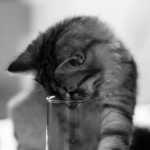 Smiley chez Vanessa voit le glass half full!
