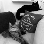 Stylish cats chez Sandra!