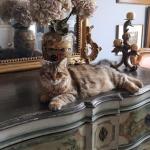 Onyx pose pour une jolie photo chez Isabelle.