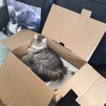 Noumea dans sa boite.