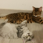 Naya et Milo, le copain Bengal chez Irene