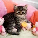 Damman Amur Marlowe chat Sibérien
