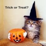 Isa Halloween