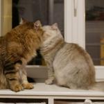 Les amoureux Lia et Istok