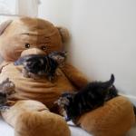 On s'amuse avec Teddy!