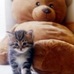 Damman Amur Inacio avec Teddy