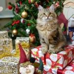 Damman Amur Inacio et le sapin de Noel