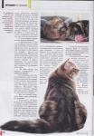 kamysh-magazine-3