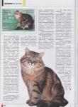 kamysh-magazine-5