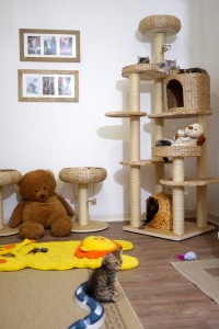 Chambre des bébés moyens